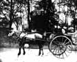 Horse and Carriage 1890's